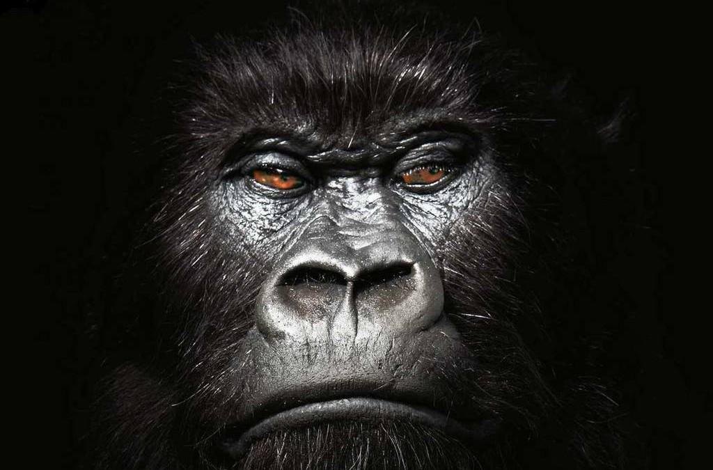 Het Verhaal van de Gorilla Ismael